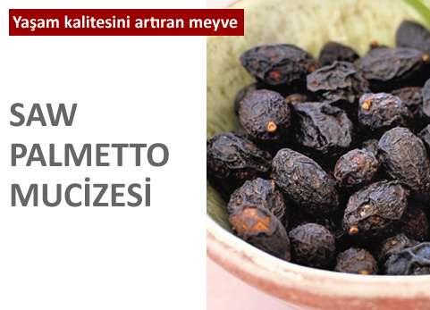 Saw Palmetto Mucizesi