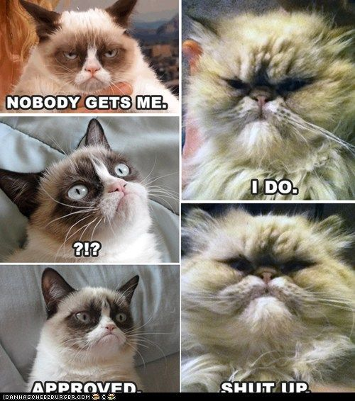 gallery for gt grumpy cat captions titanic